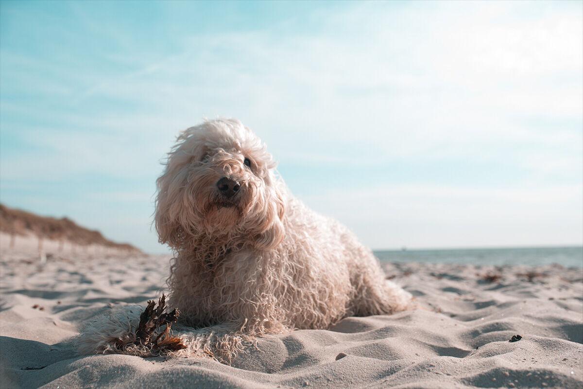 Nehmen Sie Ihren Hund in den nächsten Ostseeurlaub mit, im THE GRAND kümmern wir uns liebevoll um das Wohlergehen Ihres treuen Vierbeiners.